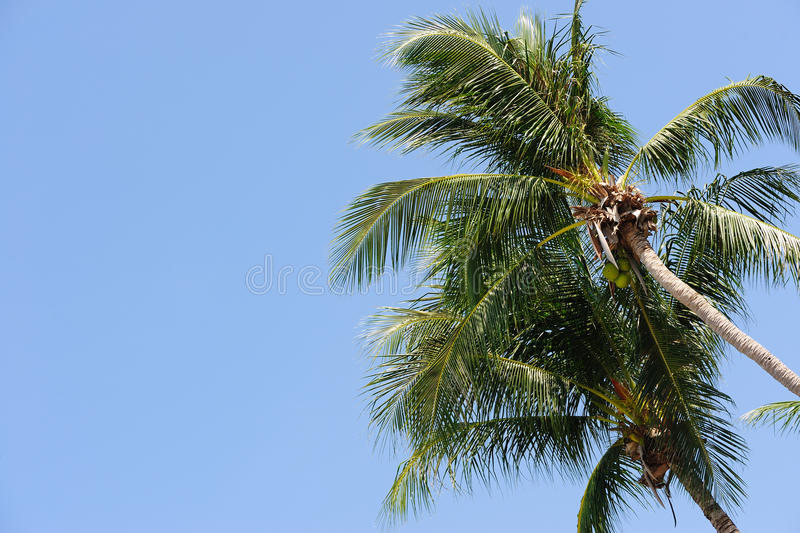 Download Palm tree stock image. Image of tree, tropical, outdoor - 18573055