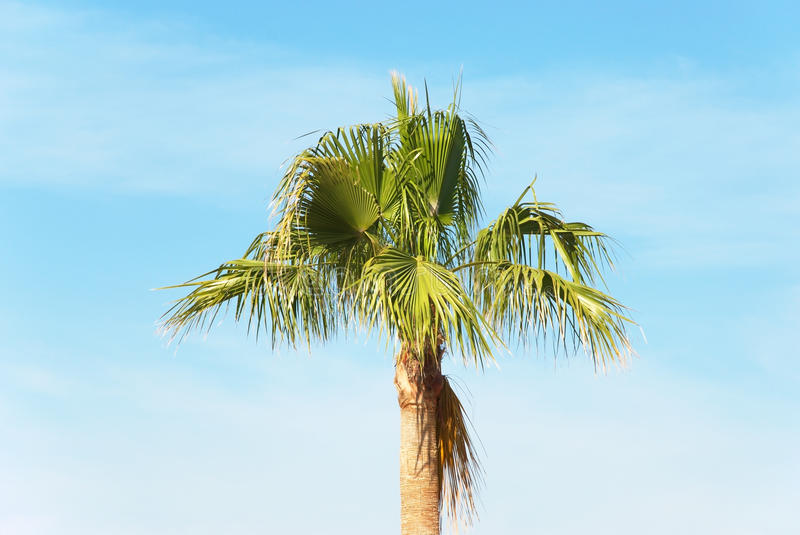 Download Palm tree stock image. Image of group, plant, vacation - 19598403