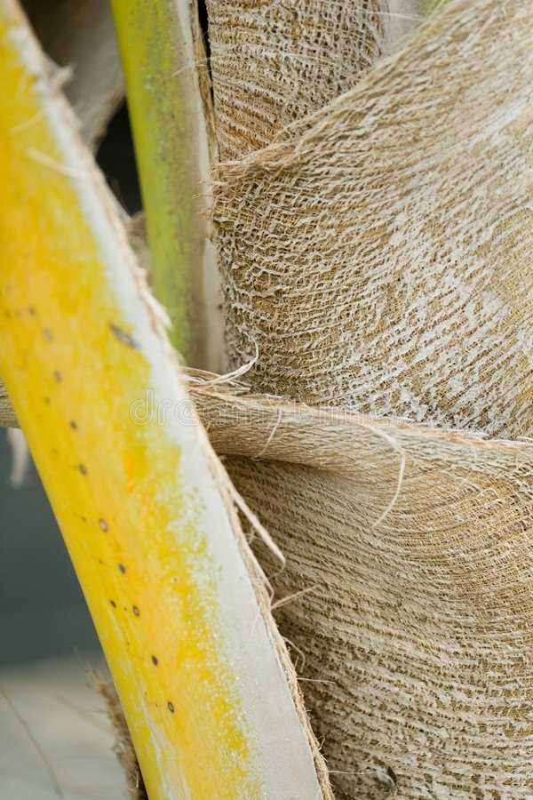 Download Palm tree stock image. Image of palm, abstract, crack - 1970205