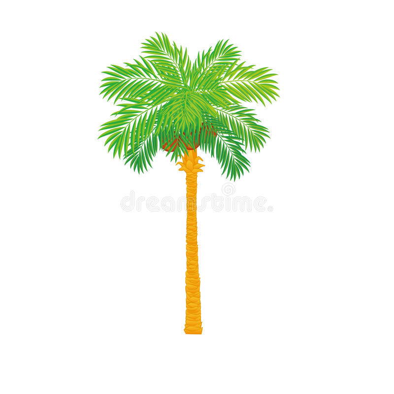 Download Palm Tree Stock Image - Image: 20288661