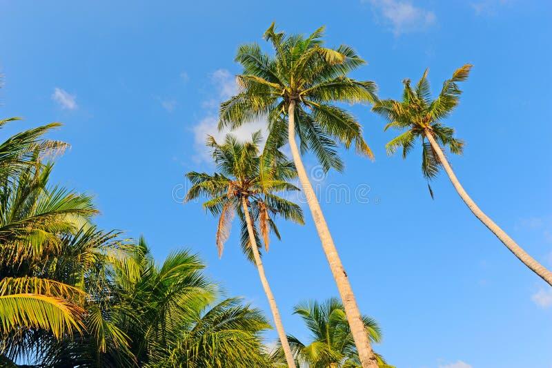 Palm Tree Stock Image