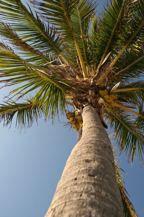 Download Palm tree stock photo. Image of ocean, sailboats, sway - 219302