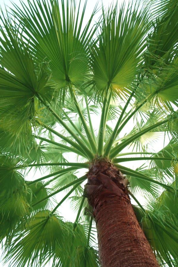 Free Palm Tree Stock Photo - 22265840