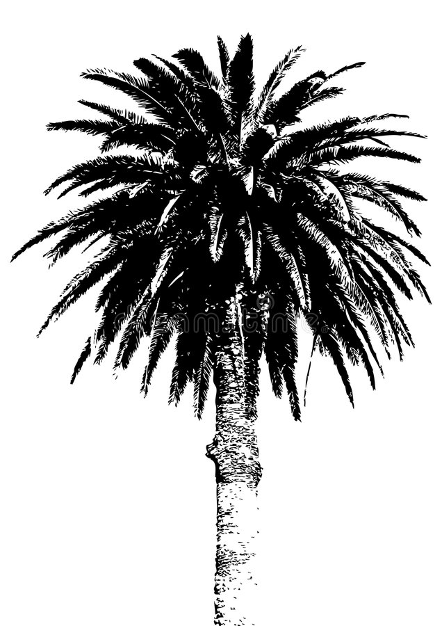 Palm tree. Silhouette isolated over white background
