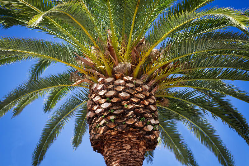 Download Palm Tree Royalty Free Stock Photo - Image: 25131925