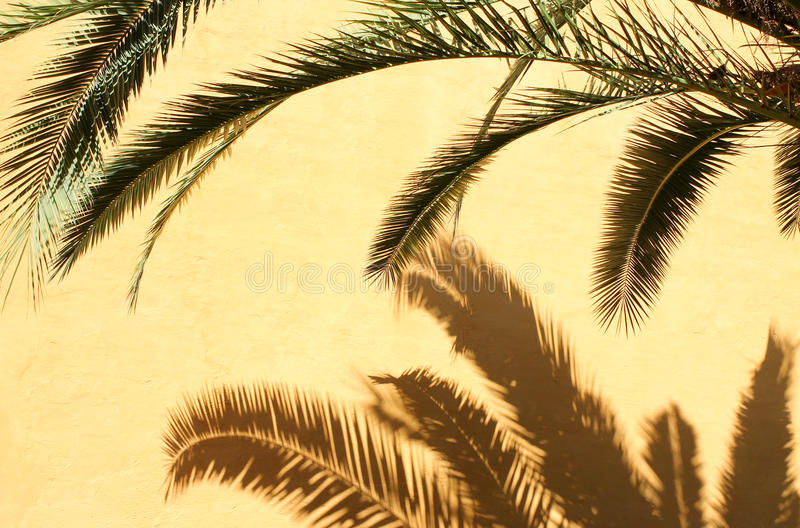 Download Palm tree stock photo. Image of architecture, bright - 25402148