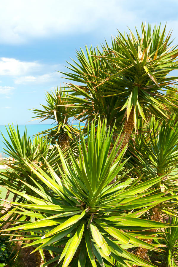 Free Palm Tree Stock Photography - 25552312