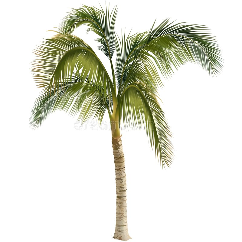 Free Palm Tree Royalty Free Stock Images - 2556219