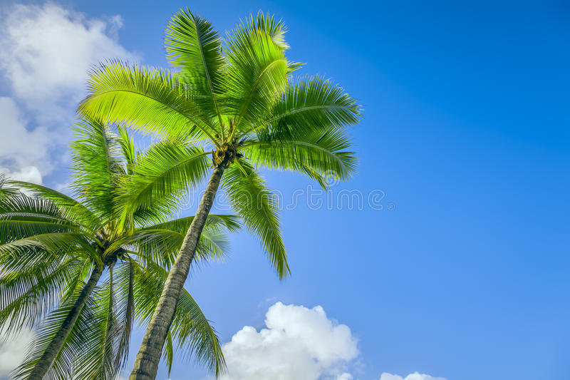Download Palm Tree Royalty Free Stock Photo - Image: 27350945