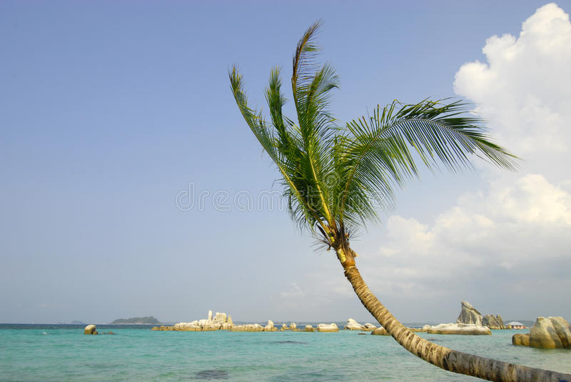 Download Palm Tree Royalty Free Stock Photos - Image: 27692168