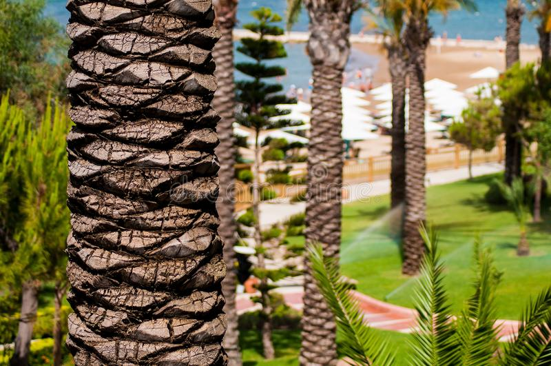 Download Palm Tree Royalty Free Stock Images - Image: 28827419
