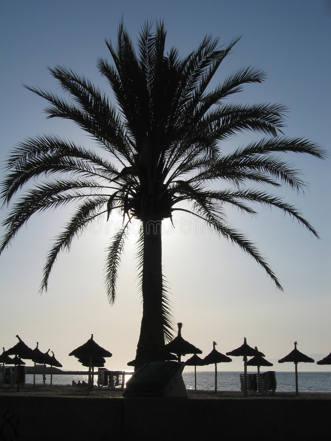 Download Palm tree stock photo. Image of contrast, palm, shadow - 3828170