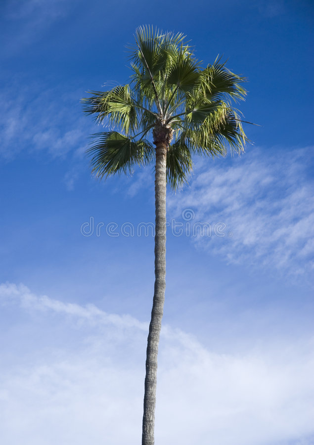 Download Palm tree stock image. Image of tall, paradise, caribbean - 3997159