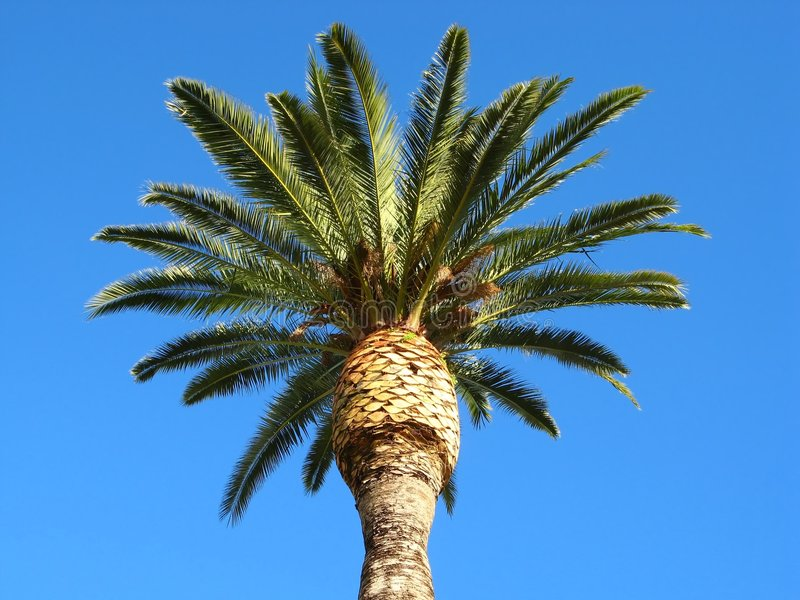 Download Palm tree stock photo. Image of riviera, provence, blue - 4138202