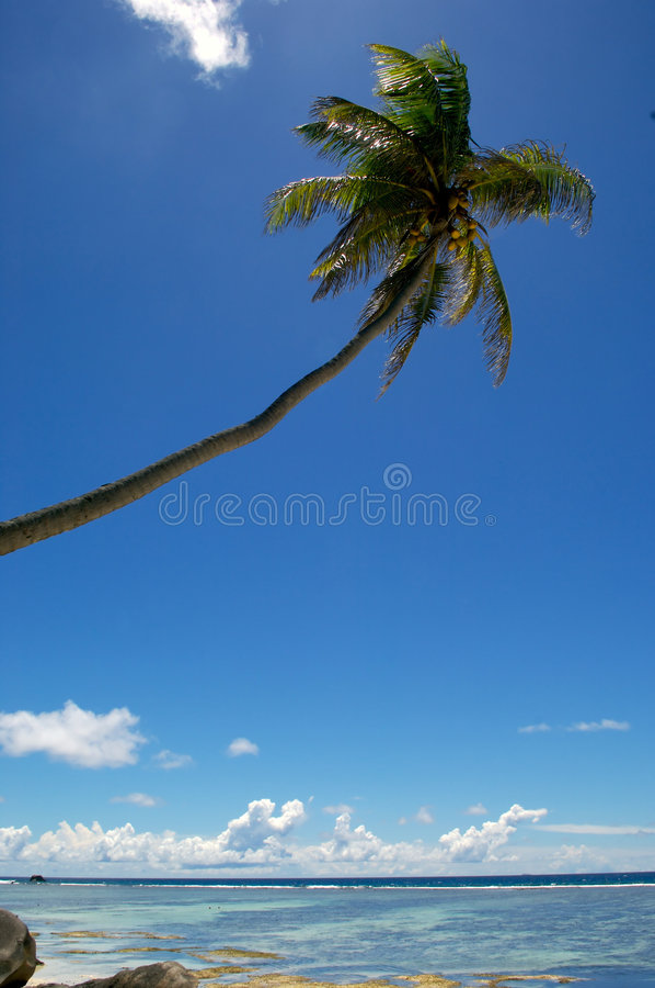 Free Palm Tree Royalty Free Stock Photos - 4180998
