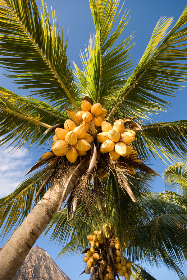 Download Palm tree stock image. Image of peaceful, trees, relaxation - 4405129