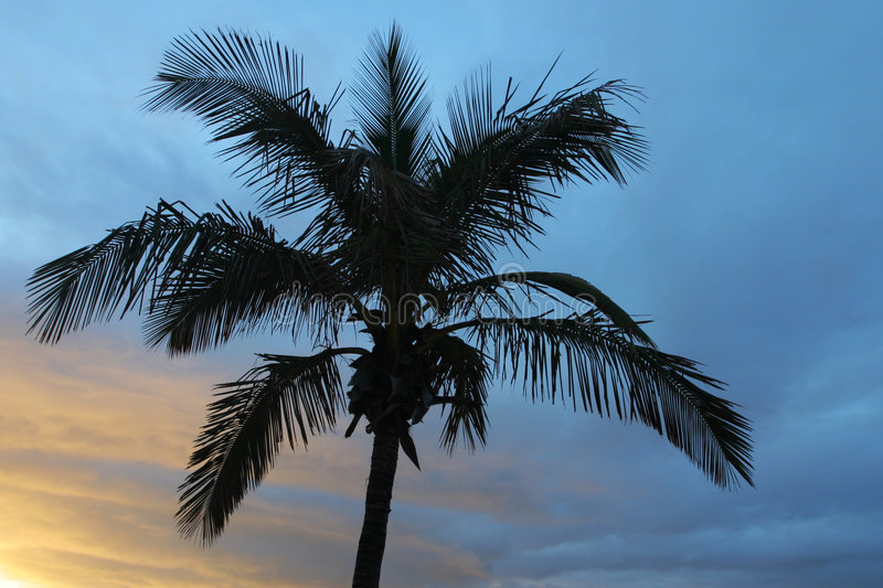 Download Palm tree stock photo. Image of black, holiday, palm, islands - 4449566