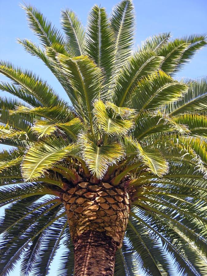 Free Palm Tree Stock Photography - 507672
