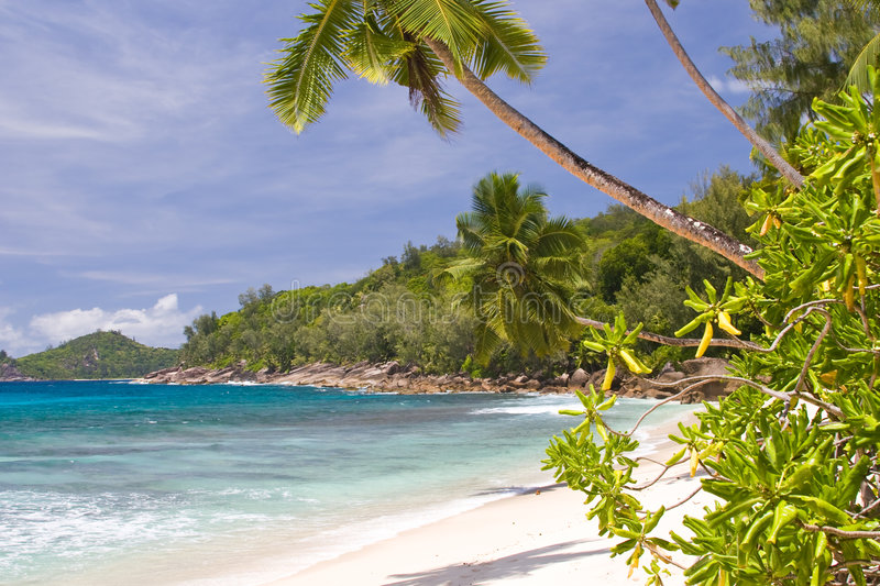 Download Palm tree stock photo. Image of beach, relax, tree, tropic - 5356844