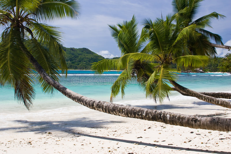 Download Palm tree stock image. Image of white, palm, plant, resort - 5356903