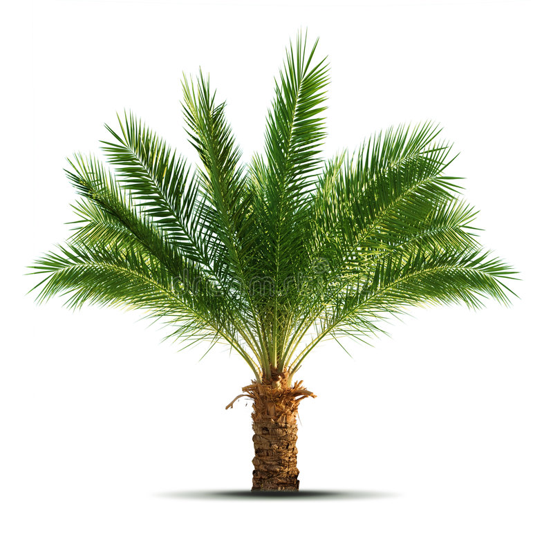 Download Palm tree stock image. Image of background, subtropical - 7949275