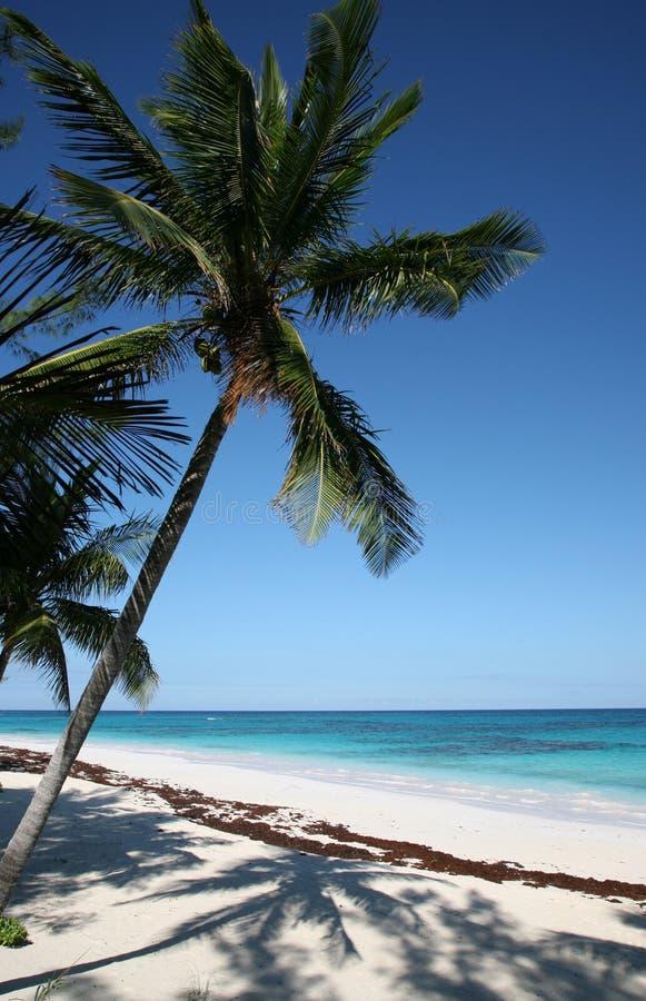 Free Palm Tree Stock Image - 8040791