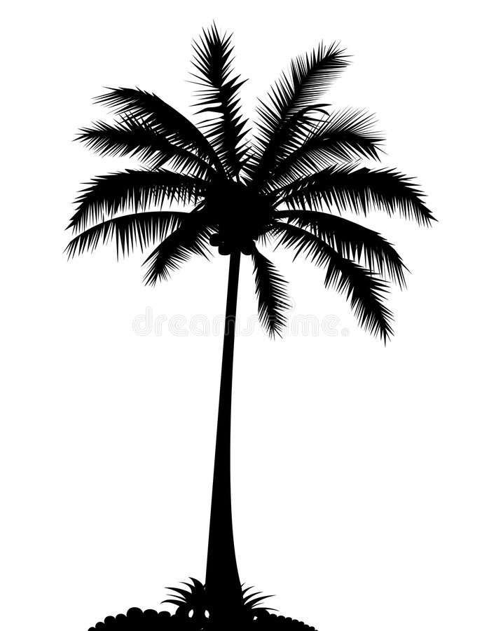 Download Palm tree stock illustration. Image of isolated, tropic - 8070962