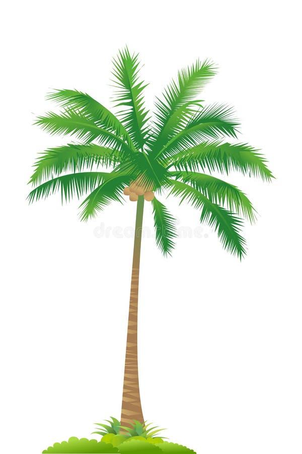 Palm tree royalty free illustration