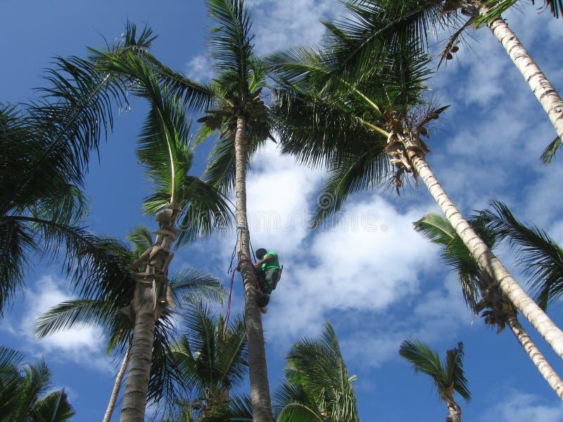 Download Palm Tree Stock Photos - Image: 85753