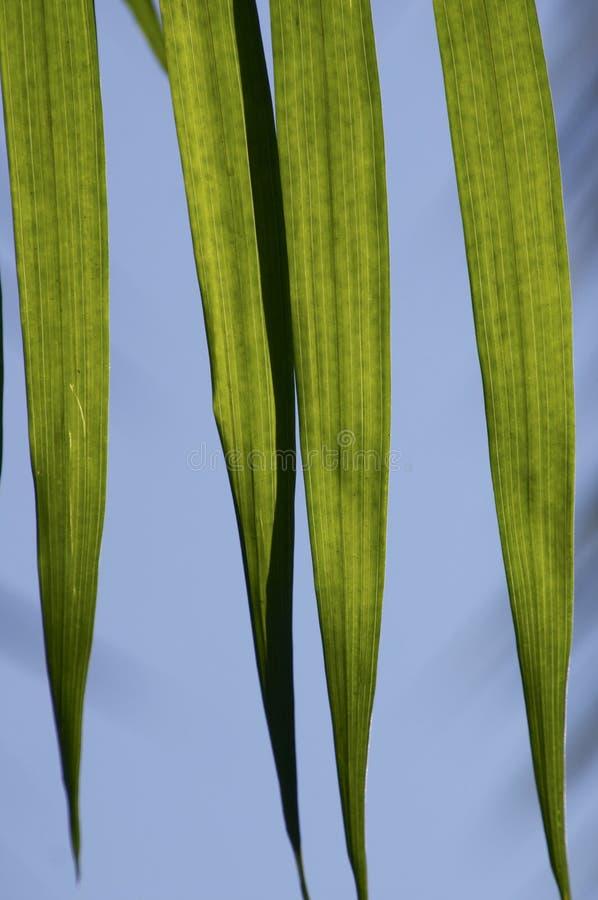 Download Palm tree stock image. Image of macro, sharp, light, stripe - 883605