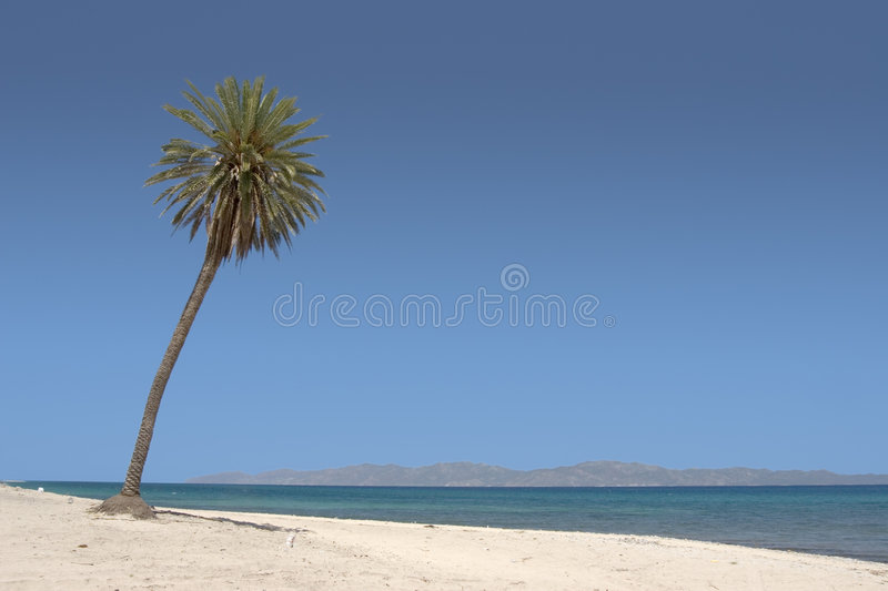 Download Palm Tree stock photo. Image of mexico, tree, vacation - 9260668