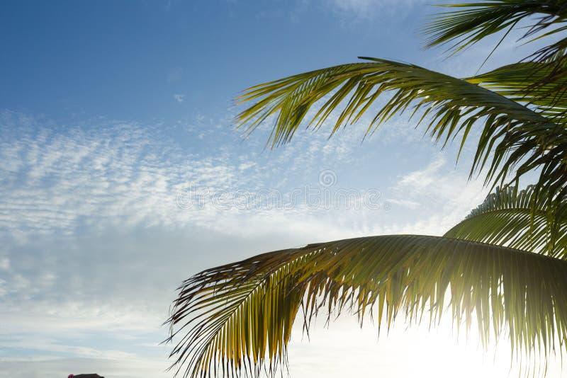 Palm tree against blue skies, Exuma, Bahamas. Palm tree fronds against blue skies with white clouds in Exuma, Bahamas stock photography