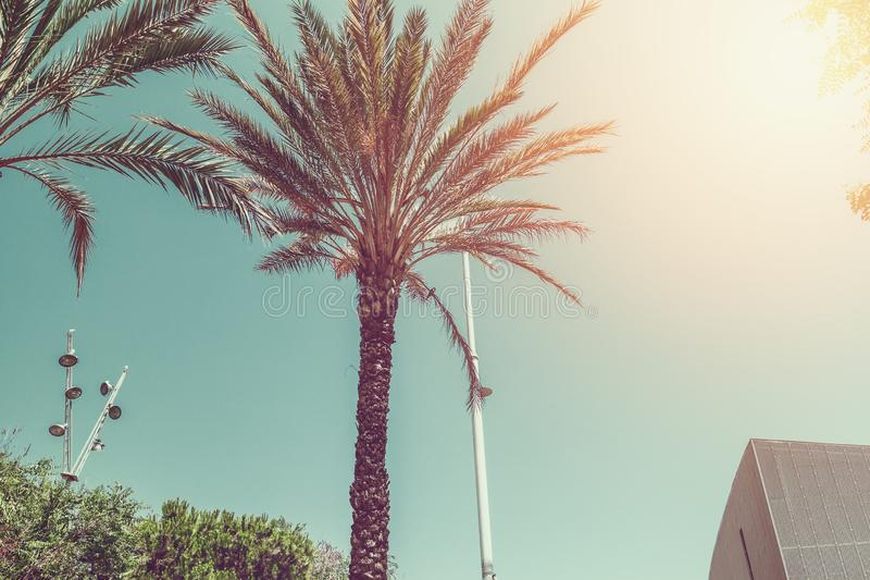 Palm tree against blue sky, vintage toned royalty free stock image
