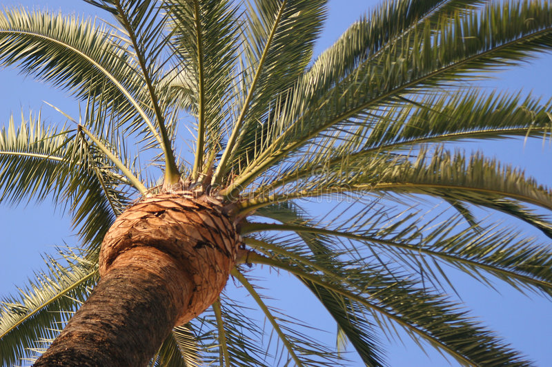 Palm tree against sky stock images