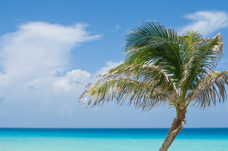Palm Tree Against Tropical Ocean Royalty Free Stock Photos