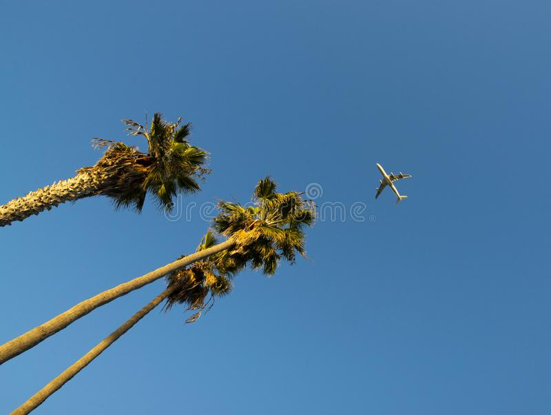 Palm Tree with Airliner royalty free stock images
