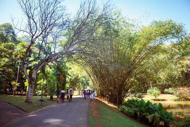 Sal tree in the peradeniya stock photo  Image of beautyful
