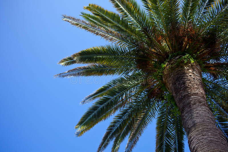 Download Palm Tree Royalty Free Stock Images - Image: 32323999