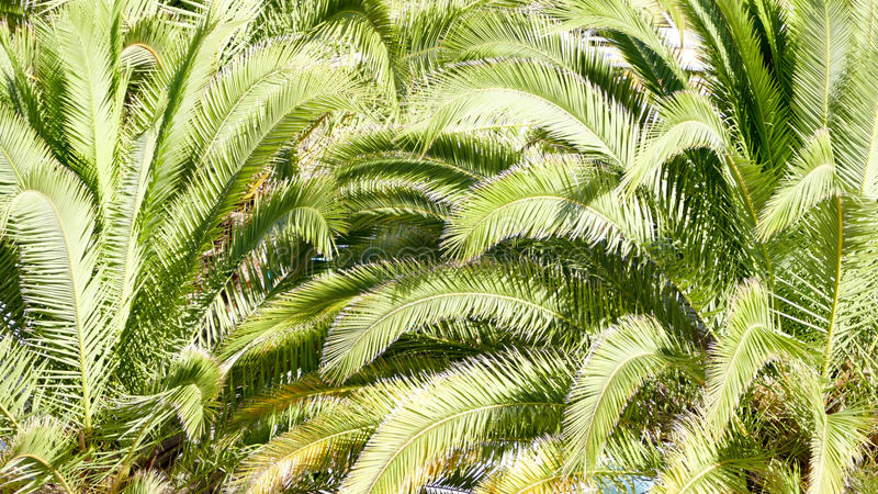 Palm tree background royalty free stock photos