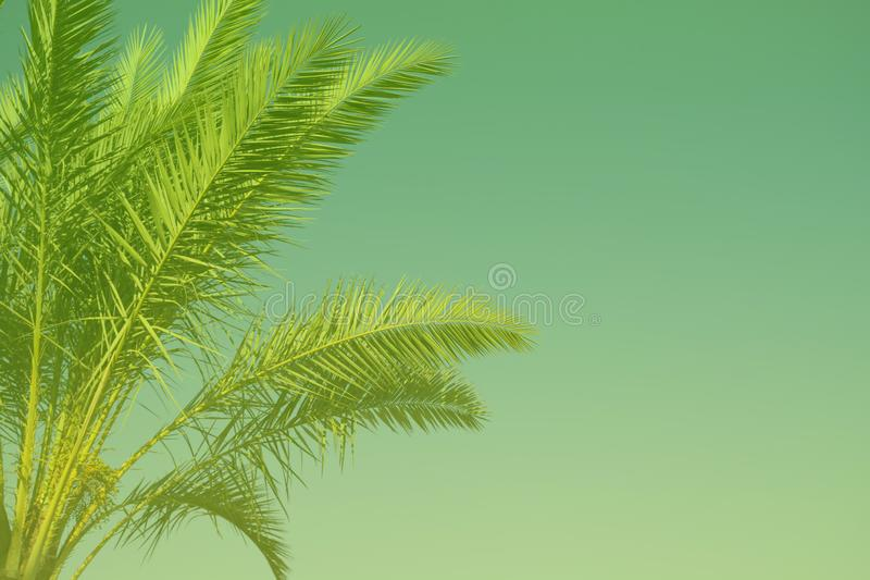 Palm tree background toned in UFO Green color of the year 2019. Creative design, exotic background with copy space royalty free stock images
