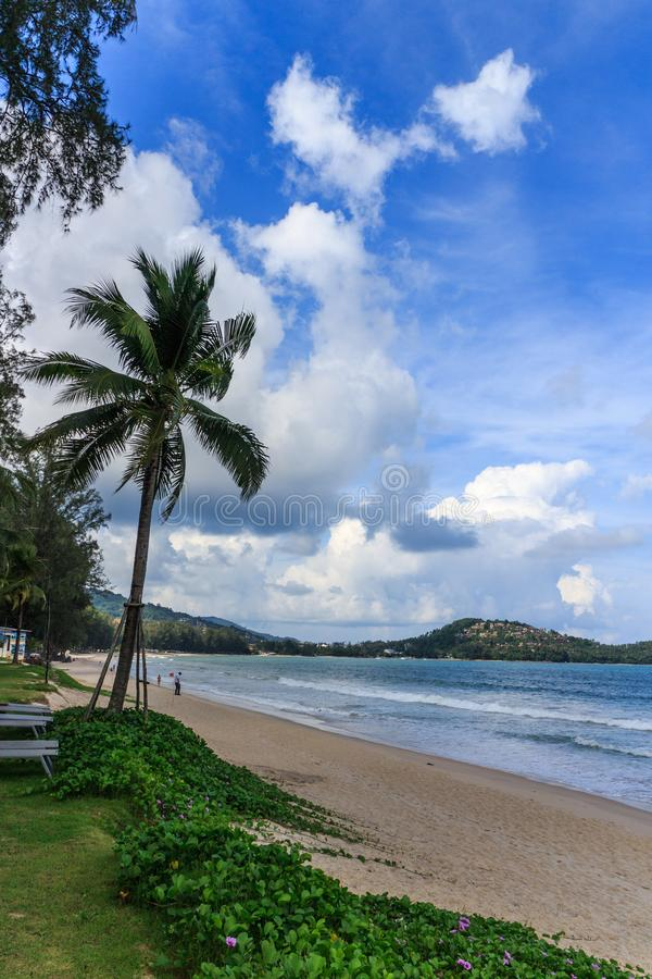 Palm tree on Bang Tao beach. Phuket on a sunny day royalty free stock images