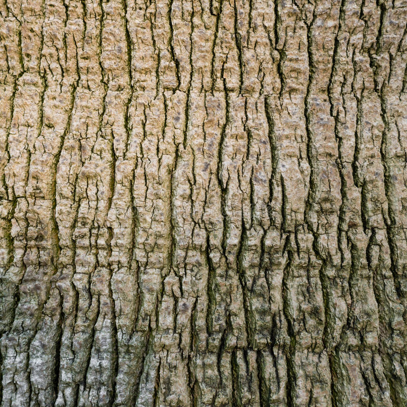 Download Palm tree bark stock photo. Image of abstract, close - 33684974
