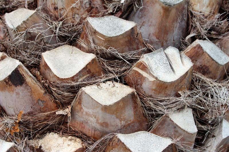 Palm tree bark background texture consisting of large woody pieces with dried grass like fillings stock photo