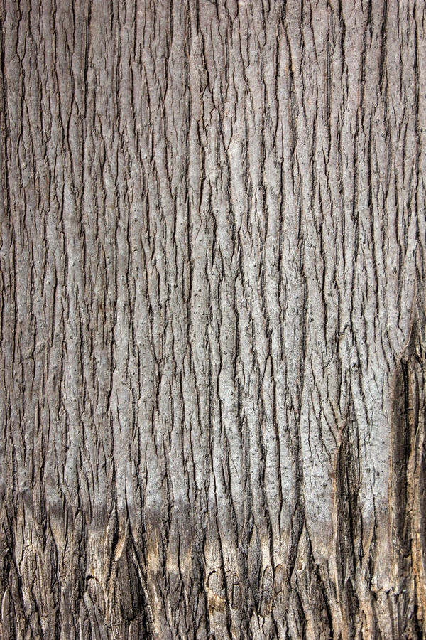 Palm Tree Bark Close Up Skin Draw Stock Photo Image