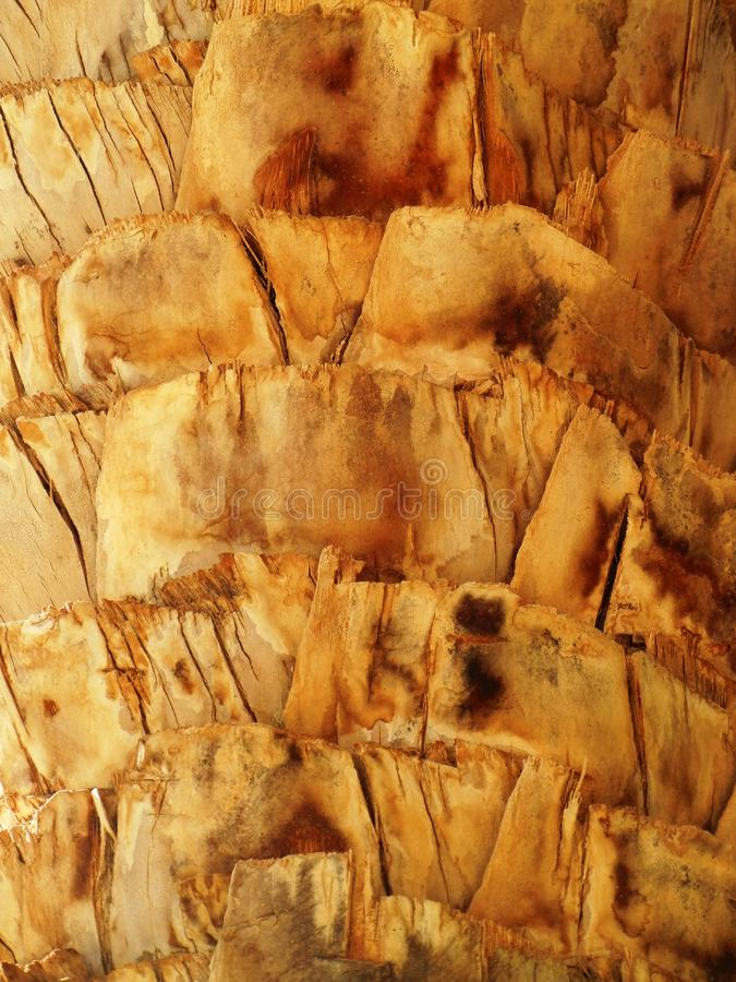 Palm tree bark structure. Detail of bark texture of a palm tree. Palm in Morocco, Africa. Brown trunk with visible growth pattern stock photography