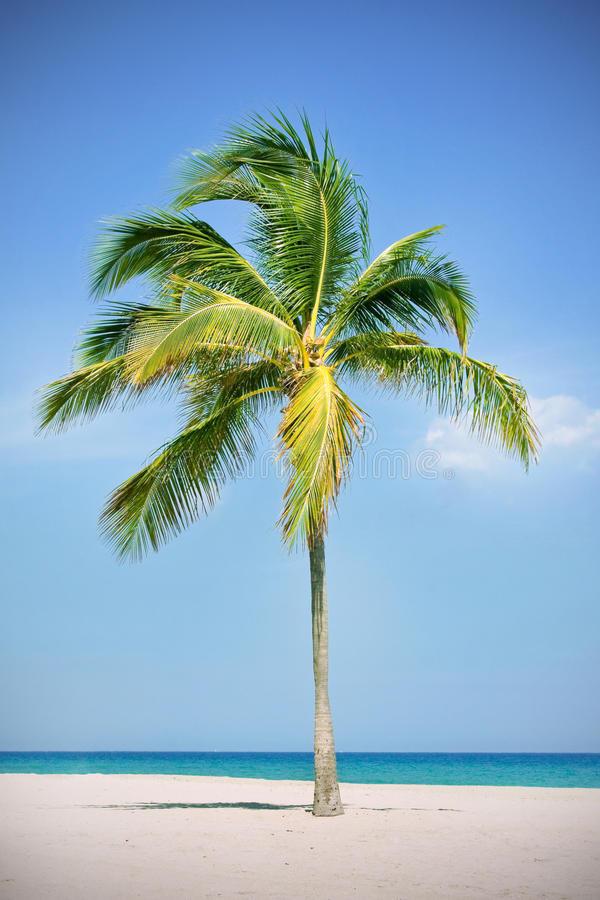 Download Palm tree at the beach stock photo. Image of beautiful - 13930294