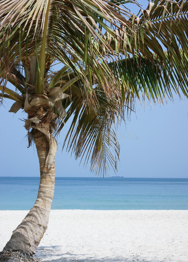 Download Palm tree on beach stock image. Image of beauty, island - 21693593