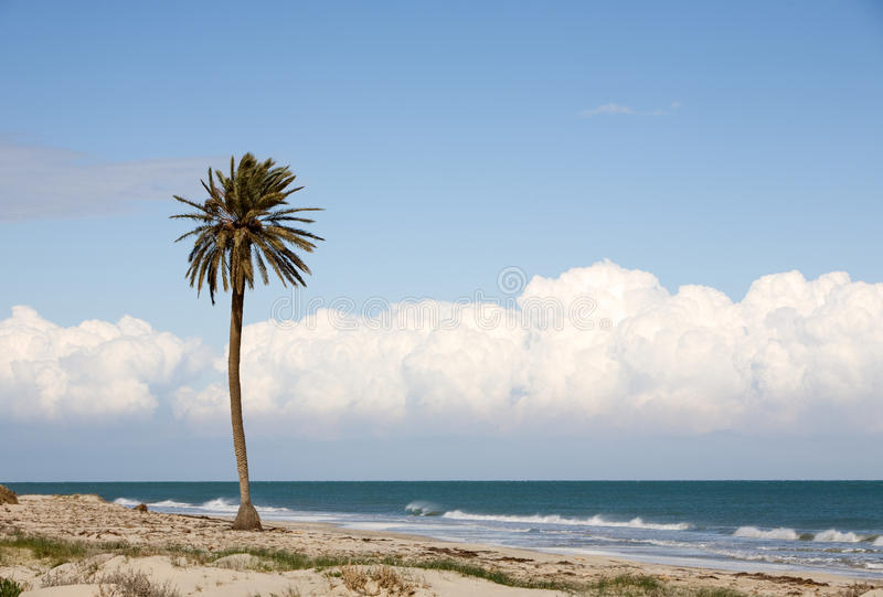 Download Palm tree on beach stock photo. Image of grass, nature - 23357212