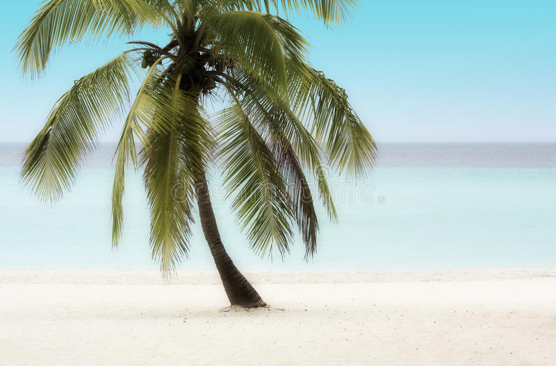 Download Palm Tree on a Beach stock image. Image of dream, coconut - 27791541