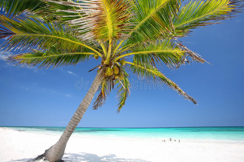 Download Palm Tree at the beach stock image. Image of küste, baden - 27940615